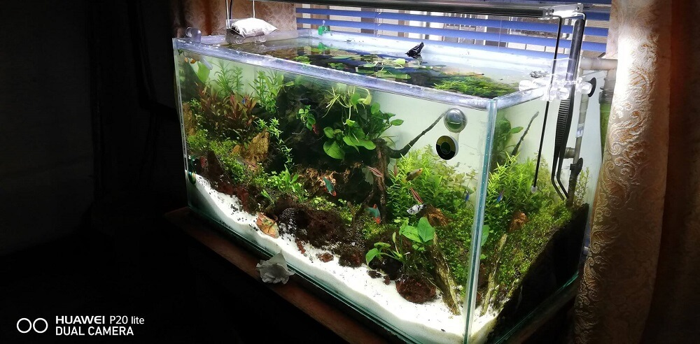 A Planted Aquarium Next to a Window But shaded By Than Tagam Philippines