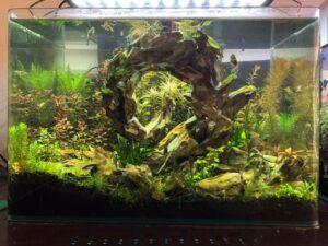A Unique Hardscape Nature Style Aquascaped by Doi Suason Philippines
