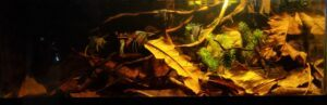 Amazon Igarape B3 Class Biotope Aquascaped by Gabby Pastorfide Philippines