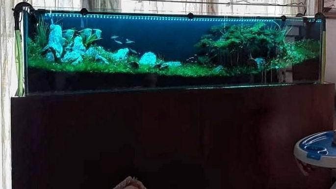 Aquarium Custom Stand & Cabinet Aquascaped by Fritz Rabaya Philippines