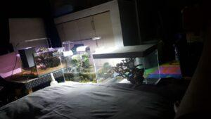Aquarium Near the bedroom Ian Garrido