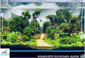 Nature Style Aquascaped by Michael Yap Philippines