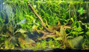 Biotope B3 Class Southeast Asia Aquascaped by Ian Paz Philippines