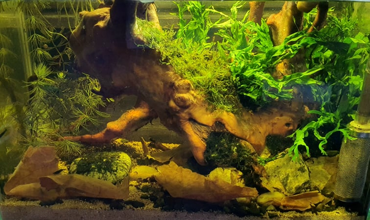 Biotope B3 Class Southeast Asian Aquascaped by Ian Paz Philippines