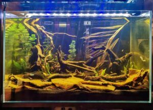 Biotope B3 Class of the Rio Negro Region Aquascaped by Lao Ricci Philippines