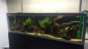 Blackwater Tank Inspiration from Takashi Amano Aquascaped by Benj Lacson Philippines One
