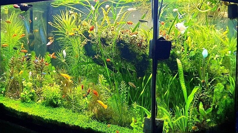 Can you see your aquarium with no obstruction