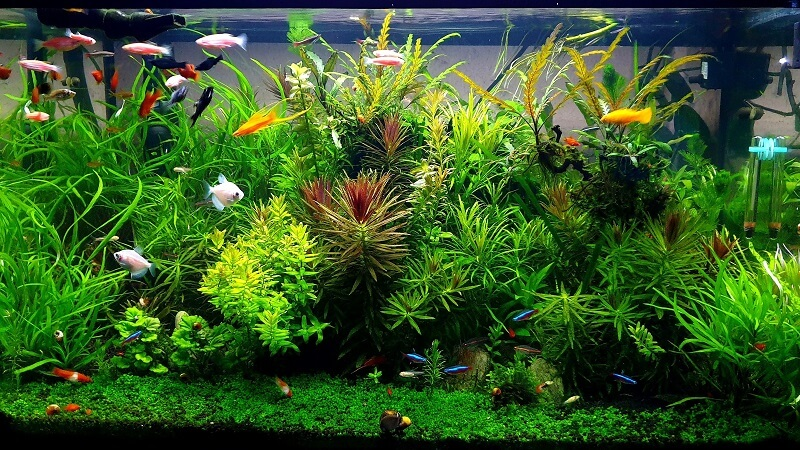 Changed the Plants Position
