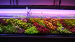 Dutch Style showing Dutch Streets 8 ft x 18 in x 13 in High-Tech Aquascaped by Jay-r Huelar Philippines