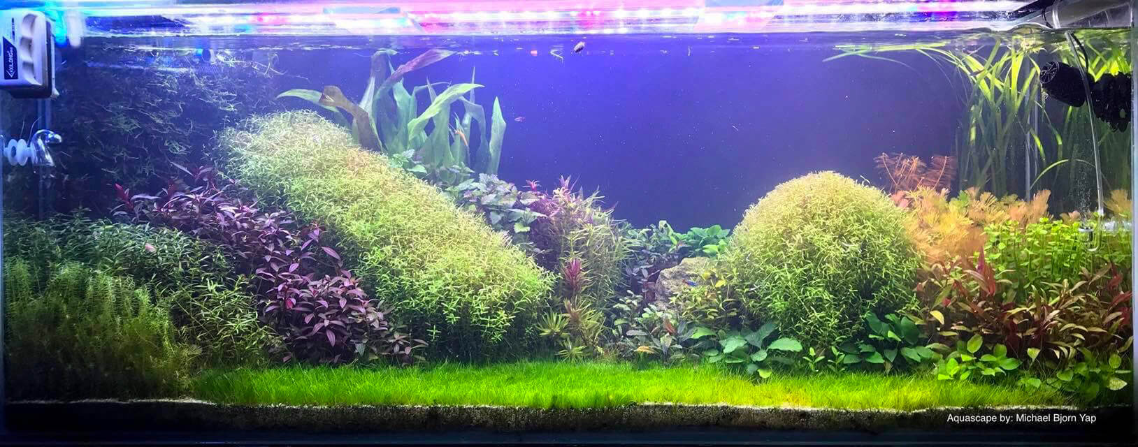 Dutch Style 150 Gallons High-Tech Aquascaped by Michael Yap Philippines