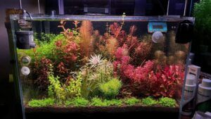 Dutch Style Aquascaped by Ayong Go Philippines