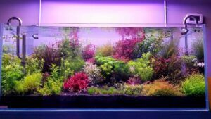Dutch Style Aquascaped by Winstod Sumogod Philippines