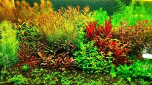 Dutch Style Fishless Cycling Aquascaped by Dennis Sancio Philippines