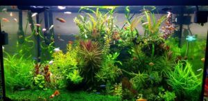 Experiment Successful with Ludwigia Super Red Mini and AR Mini in Driftwood