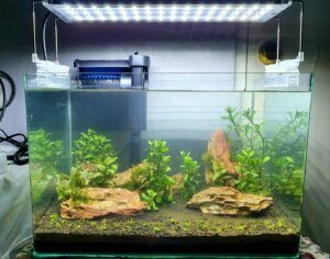 Fishless Cycling Aquascaped by Davy De Borja Philippines