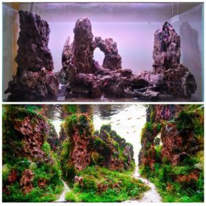 Hardscape Diorama - Aquascaped by Rennier Katigbak Philippines