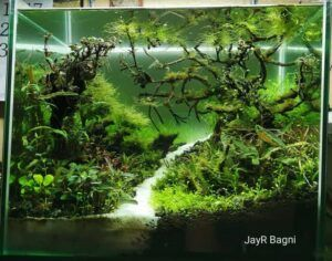 Nature Style Aquascaped by JayR Bagni Philippines