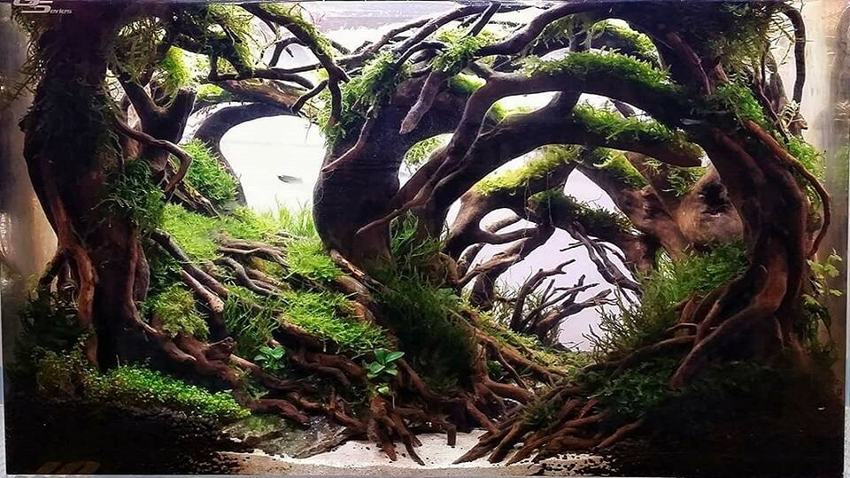 Hardscape Diorama Style Aquascaped by Edrian Corpuz Espiritu Philippines One