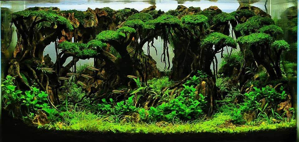 Hardscape Diorama Style Aquascaped by Edrian Corpuz Espiritu Philippines