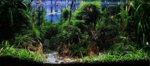 Hardscape Diorama Style Aquascaped by Fritz Rabaya Philippines