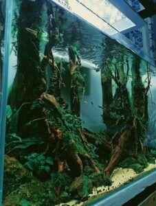 Hardscape Diorama Style Aquascaped by Jan Lander De Guzman Philippines
