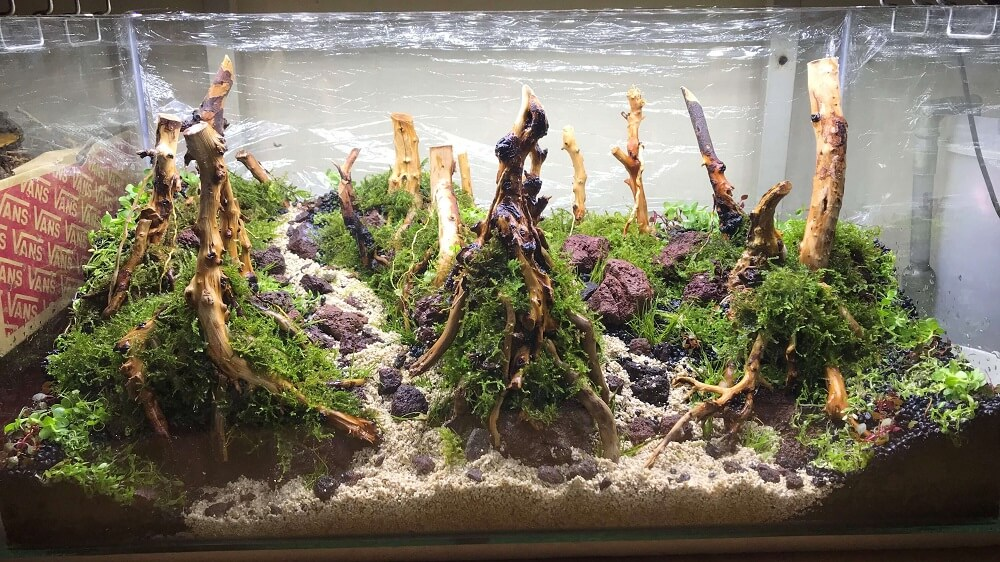 Hardscape Diorama Style Aquascaped by Jeremy Navarro Philippines