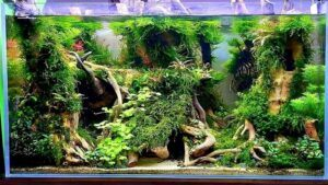 Hardscape Diorama Style Aquascaped by Kristopher Gagarin Philippines