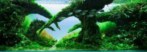 Hardscape Diorama Style Aquascaped by Matthew Manes Philippines