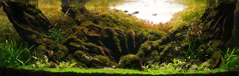 Hardscape Diorama Style Aquascaped by Matthew Manes Philippines One