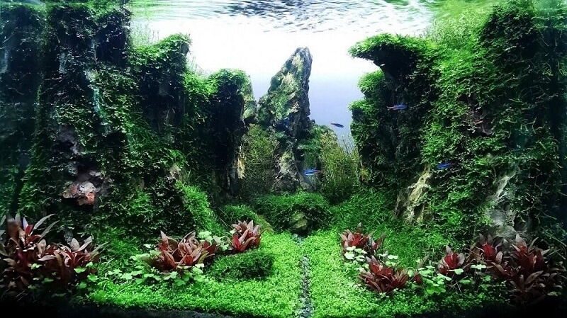 Hardscape Diorama Style Aquascaped by Michael Yap Philippines