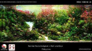 Hardscape Diorama Style Rummynose Tetras Aquascaped by Rennier Katigbak Philippines