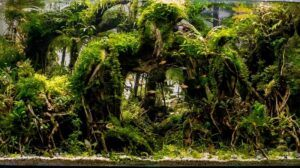 Hardscape Diorama Style Aquascaped by San Mig Chad Philippines