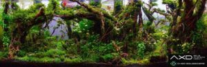 Hardscape Diorama Style Aquascaped by San Mig Chad Philippines One