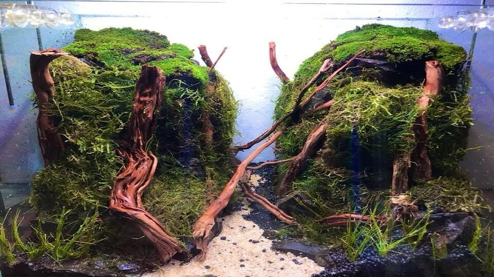 Hardscape Diorama Style During Setup Aquascaped by Jeremy Navarro Philippines