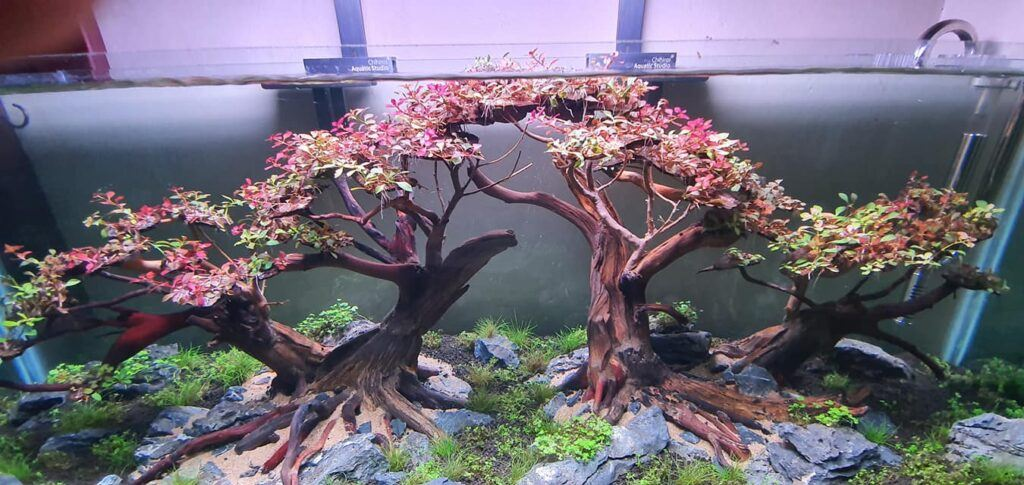 Hardscape Diorama Style Fishless Cycling Aquascaped by Francis Neil Carriaga Philippines