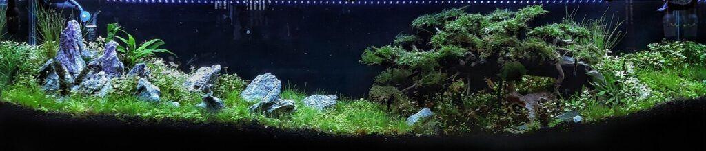 Hybrid Iwagumi Style with Diorama Style Bonsai Seiryu Stones Aquacaped by Fritz Rabaya Philippines