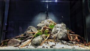 Hybrid Iwagumi with Driftwood Local Stones from Buhisan River Aquascaped by Fritz Rabaya Philippines