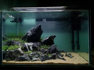 Iwagumi Style Aquascaped by Francis Sumido Philippines