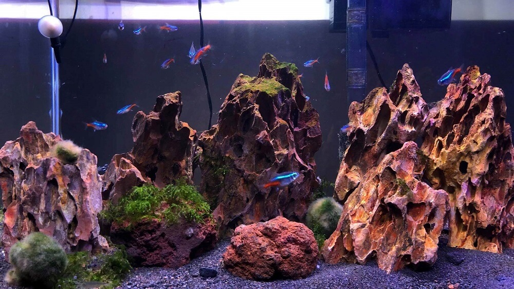 Iwagumi Style Aquascaped by James Francis Conda Philippines