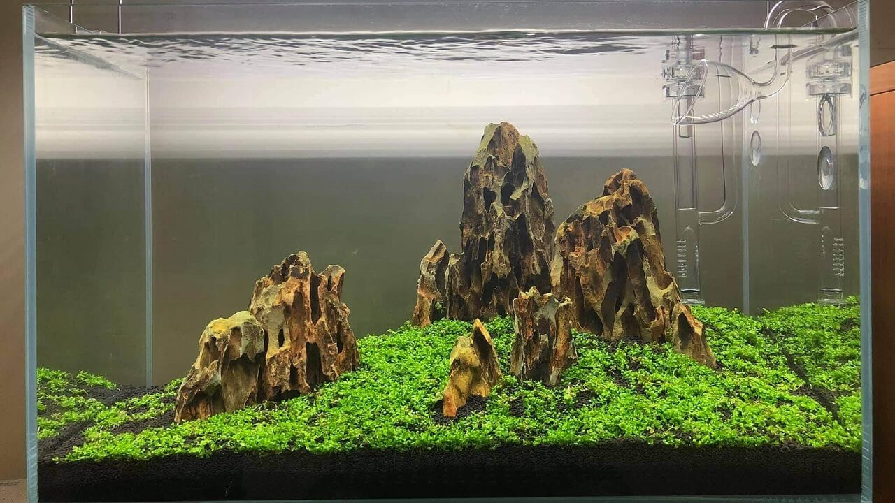 Iwagumi Style Aquascaped by Monnette Arañas Philippines