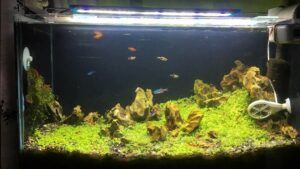 Iwagumi Style Aquascaped by Raymart Dennon Philippines