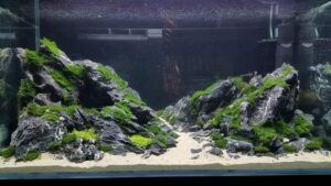 Iwagumi Style Black Seiryu Stones Low-Tech Aquascaped by Edrian Corpuz Espiritu Philippines