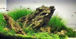 Iwagumi Style Dragon Stones Aquascaped by Geoffrey Javier Stable Philippines