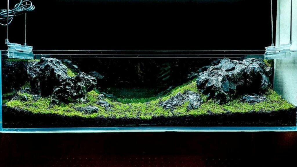 Iwagumi Style Black Seiryu Stones Aquascaped by John Paolo Esteban Philippines Two