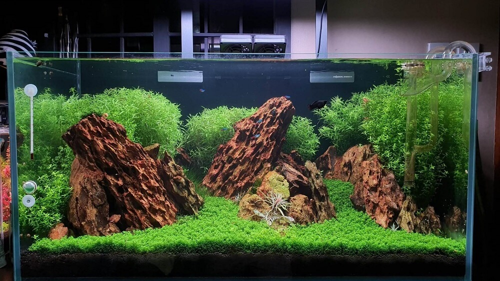 Iwagumi Style with Tall Stem Plants at the Back Aquascaped by Ayong Go Philippines One