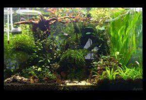 Jungle Franco Chester Pongco