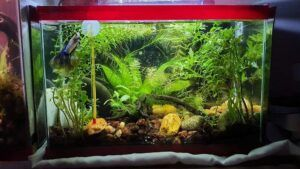 Jungle Style 2.5 Gallon Nano Tank Aquascaped by Marcky Bevic Rivera Philippines