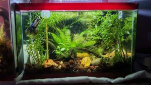 Jungle Style 2.5 Gallon Nano Tank Aquascaped by Marcky Bevic Rivera Philippines
