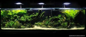 Jungle Style 200 Gallons High-Tech Aquascaped by Michael Yap Philippines