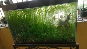 Jungle Style Aquascaped by Alain Denco Invierno Two